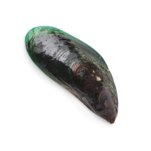 New Zealand Green Mussel